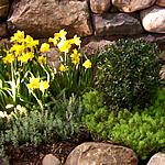 GardenScape 2012
